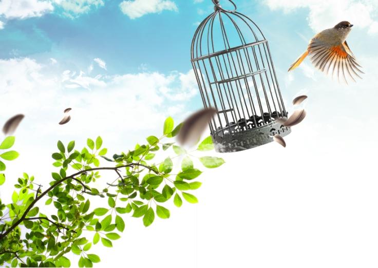 Bird free